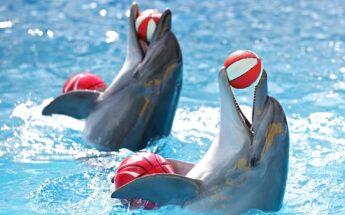 Sekmadienis Klaipėdoje su delfinais!
