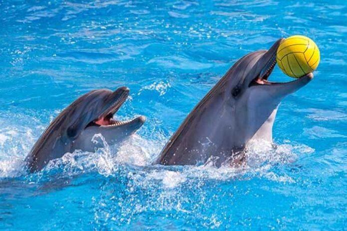 Sekmadienis Klaipėdoje su delfinais ir nemokamas Jūrų muziejus!