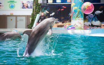 Sekmadienis Klaipėdoje su delfinais ir nemokami muziejai!