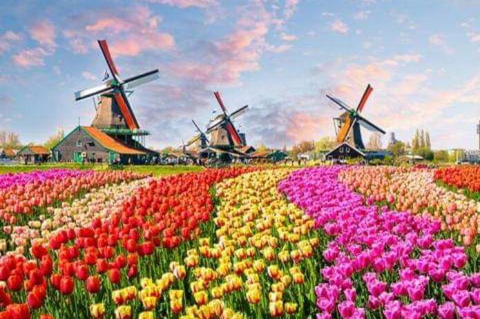 Gėlių paradas Olandijoje aplankant gražiausius Europos sodus!