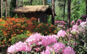 Europos parkas, lietuviškosios orchidėjos ir margaspalvis botanikos sodas!