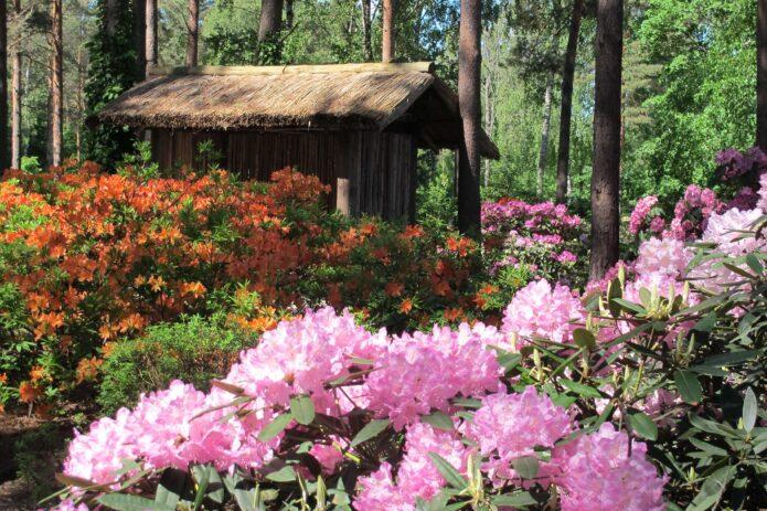 Europos parkas, žygis Šilėnų pelke ir margaspalvis botanikos sodas!
