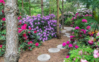 Baltų kelias, baroko vaišės ir rododendrų jūra botanikos sode!